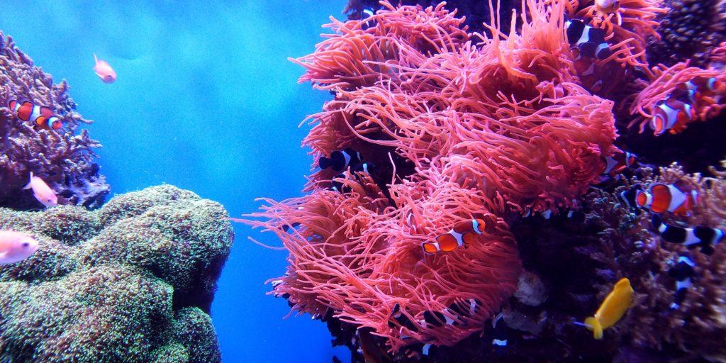 Scuba diving holidays Fiji